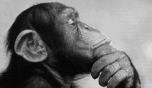 Thinking Monkey Pictures, Images & Photos | Photobucket